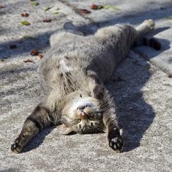 Votre chat dort parfois dans des positions vraiment improbables?