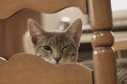 Votre chat pense que la plupart du mobilier a besoin d'être griffée ?