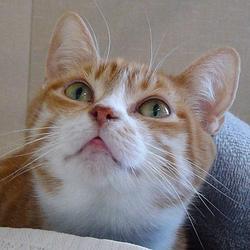 Votre chat est toujours dans vos pattes, même quand vous allez aux WC ?