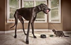 Le plus grand chien du monde est Zeus ! Sa taille au garrot est de :