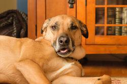 Parlez-vous à votre animal de compagnie ?