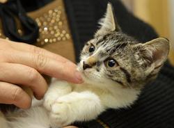 Aimez-vous caresser votre animal en lui répétant à quel point vous l'aimez ?