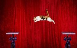 Le saut le plus long réalisé par un chat est de :