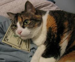 Le chat le plus riche a reçu un héritage de :