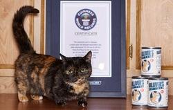 Le chat le moins grand du monde mesure :
