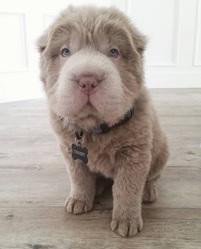 Quel est le nom de ce chien star ?