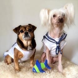 Quels sont les noms de ces chiens stars ?