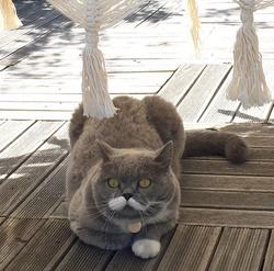 Quel est le nom de ce chat star ?