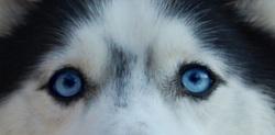 A quel chien appartient ce beau regard ?
