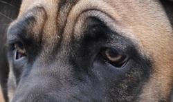 A quel chien appartient ce regard ?