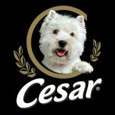 De quelle race est ce toutou, mascotte de la marque d'aliments pour chien César ?