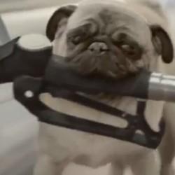 De quelle race étaient les trois chiens de la publicité pour Citroën ?
