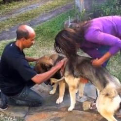 Un chien s'est échappé du refuge où il avait été recueilli pour retrouver son frère. Où s'est produite cette histoire ?