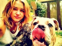 L'un des chiens de la chanteuse Miley Cyrus a fait récemment une très grosse bêtise. Mais laquelle ?
