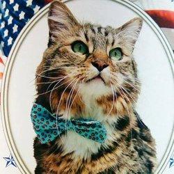 Aux Etats-Unis, dans l'Etat de Virginie, un chat baptisé Hank est devenu une star parce que...