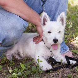 Dans le Massachusetts, aux Etats-Unis, un couple a perdu la vie en sauvant son chien