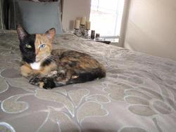 Une petite chatte à deux visages suscite étonnement et admiration sur Internet. Comment s'appelle-t-elle ?
