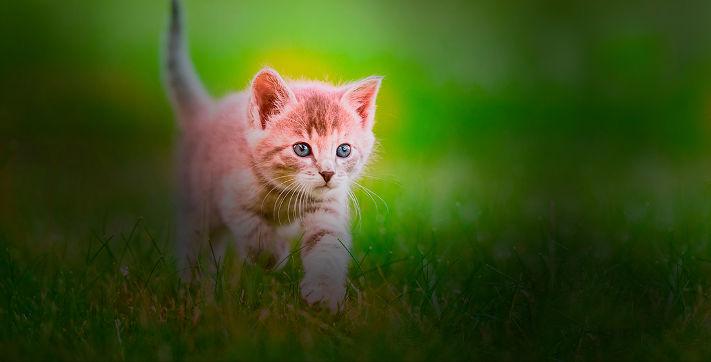 Découvrez toutes nos astuces pour rendre votre chat heureux !