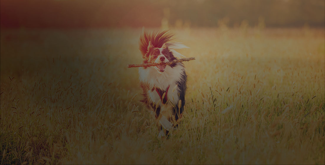 Découvrez toutes nos astuces pour rendre votre chien heureux !