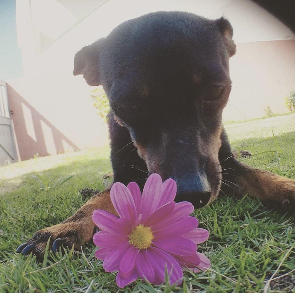 chien printemps fleur