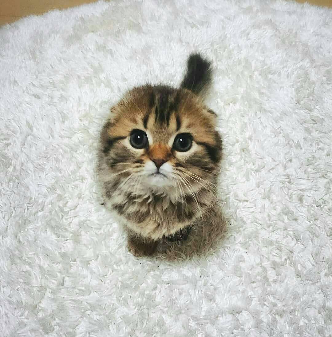 Très 20 chatons trop mignons qui vont vous donner envie de caresser  EC84