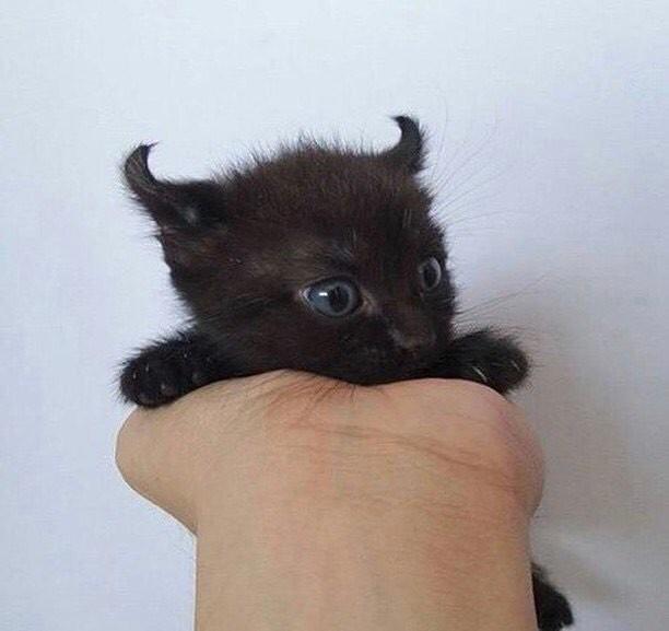 Super 20 chatons trop mignons qui vont vous donner envie de caresser  JF16