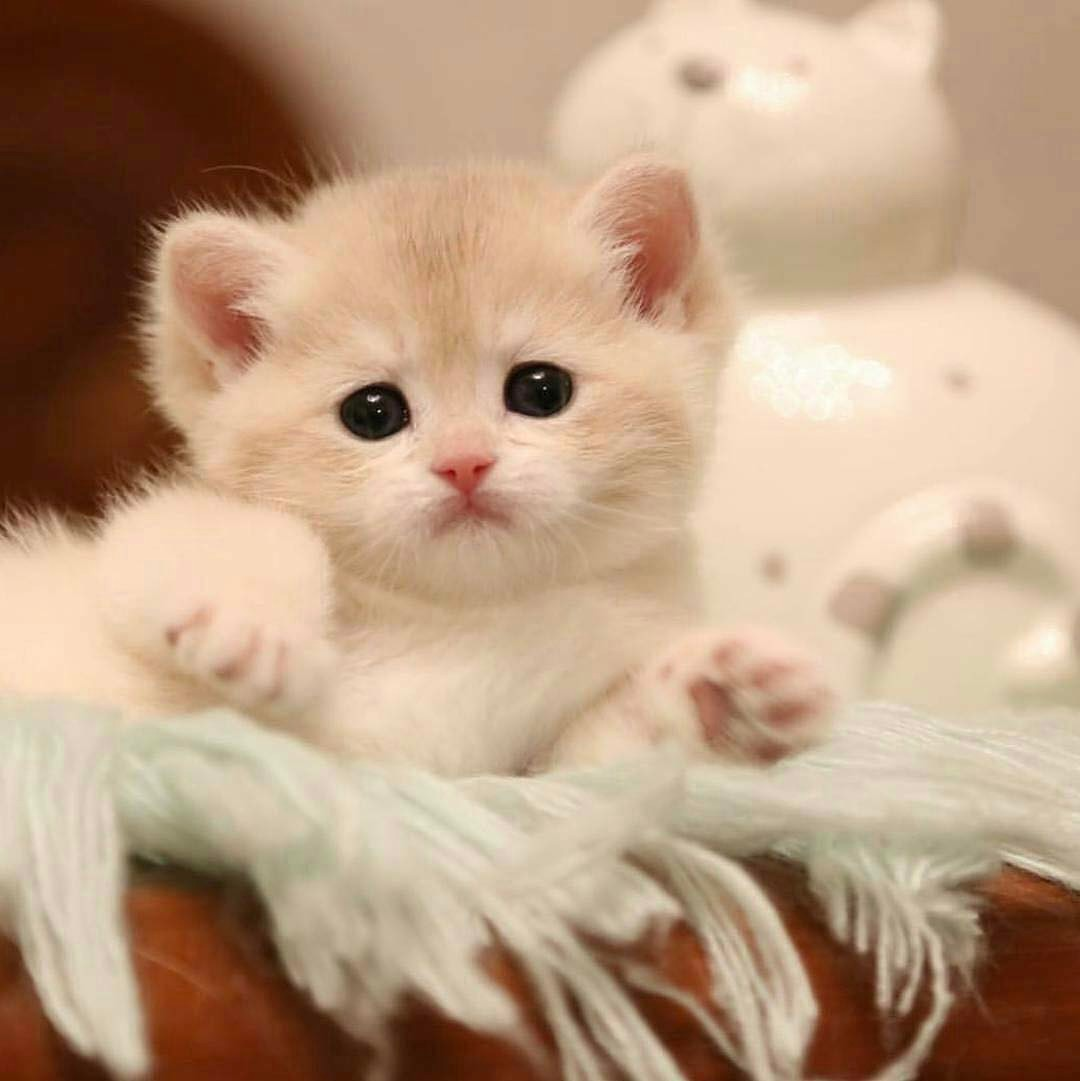 Gut bekannt 20 chatons trop mignons qui vont vous donner envie de caresser  WB24