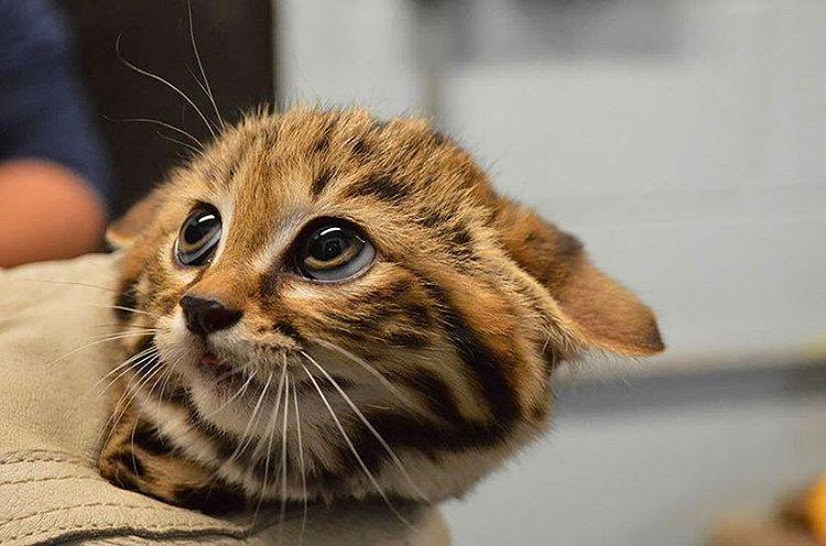 Exceptionnel 20 chatons trop mignons qui vont vous donner envie de caresser  DB45