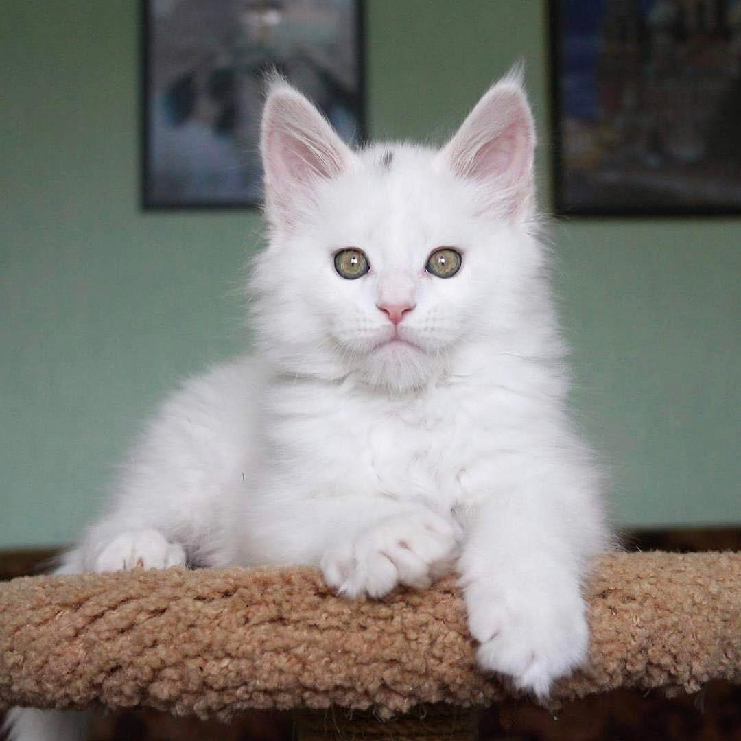 Bien-aimé 20 chatons trop mignons qui vont vous donner envie de caresser  XO49