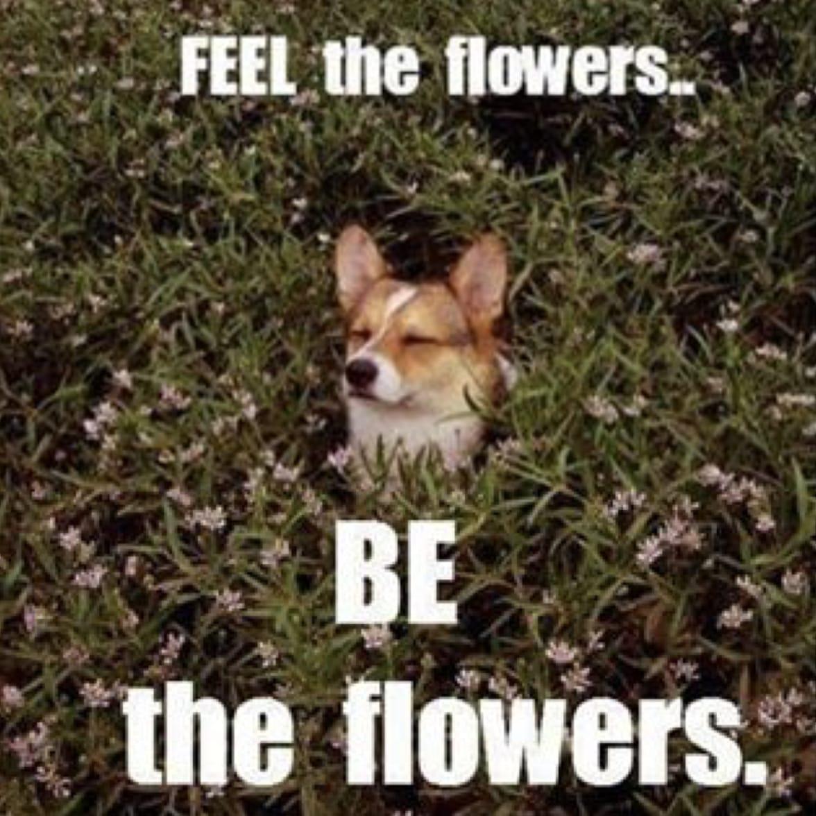 chien printemps fleurs