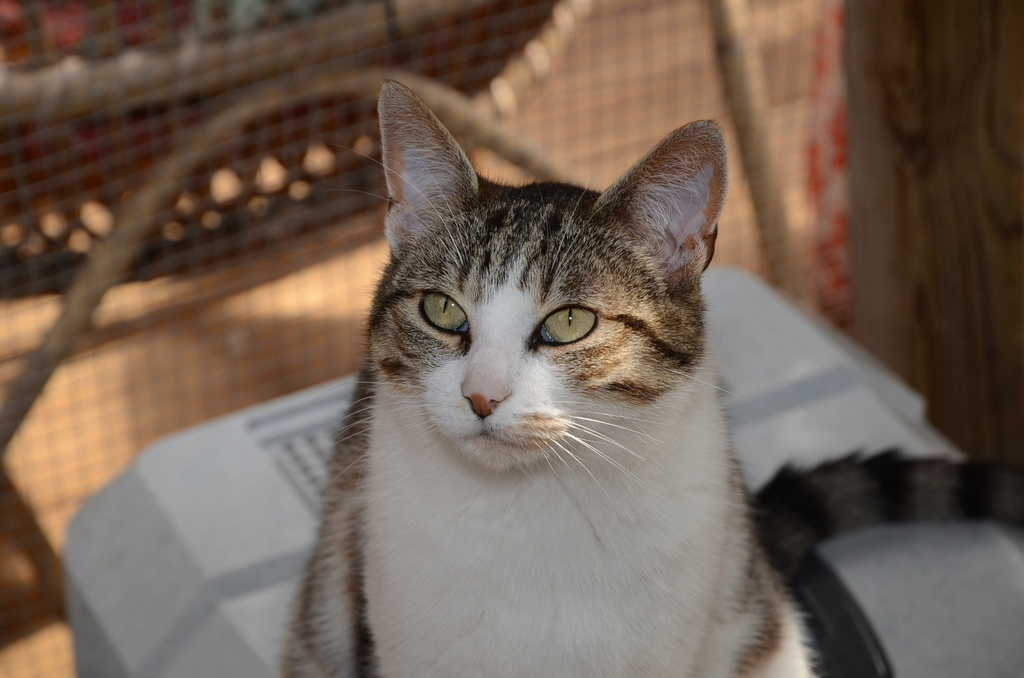 aubepine ecole chat quiberon