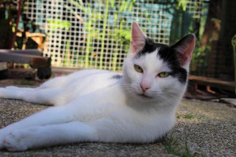 basile ecole chat quiberon