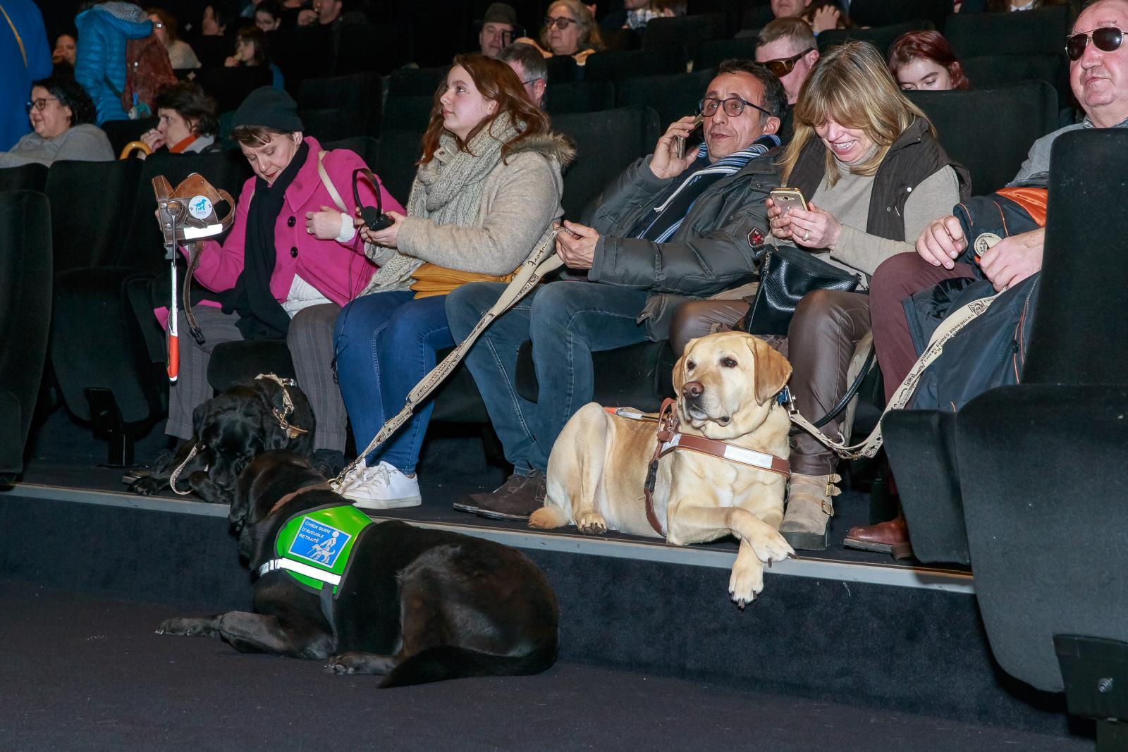 chien guide cinéma