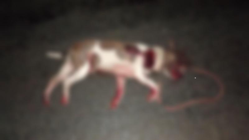 Un chien accroché à la voiture de sa maîtresse meurt après avoir été traîné sur la route