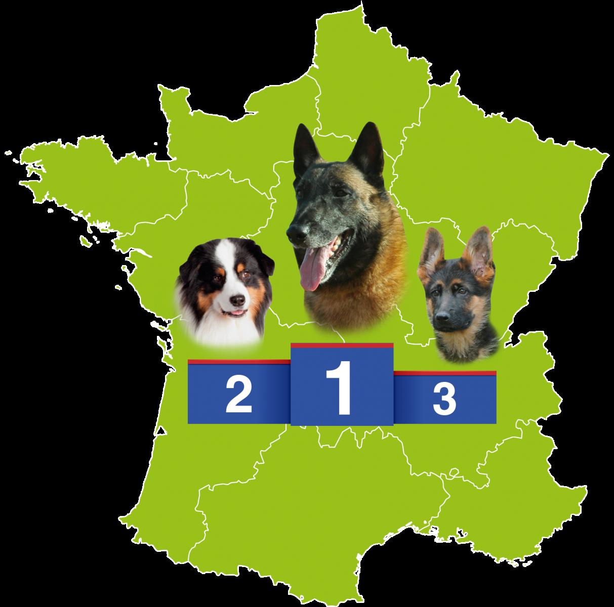 races chiens préférées des français