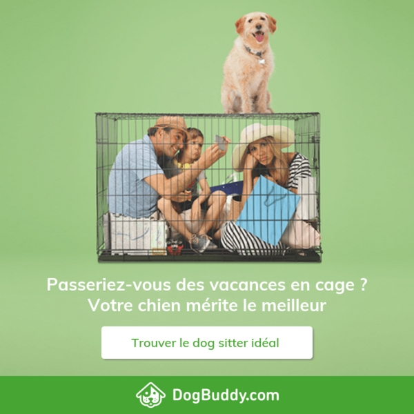 Pourquoi confier votre chien à un dogsitter en vos absences ?