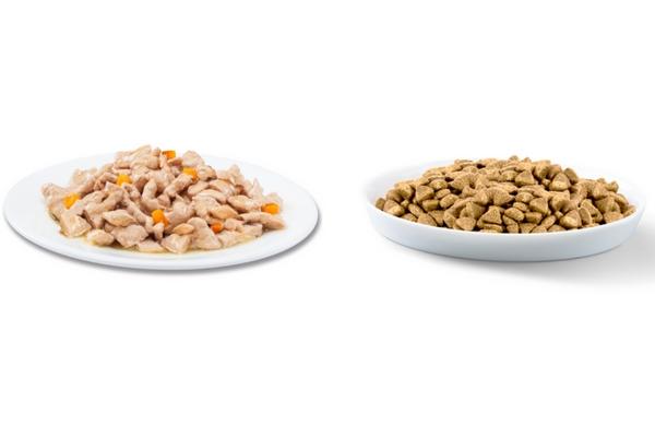 Alimentation mixte : quels sont les bienfaits pour mon chat ?
