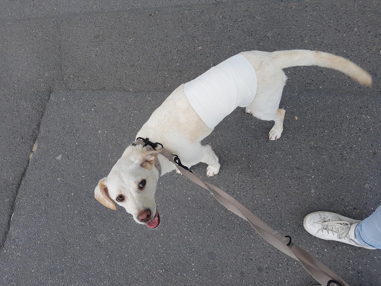 Malinka sort de clinique vétérinaire