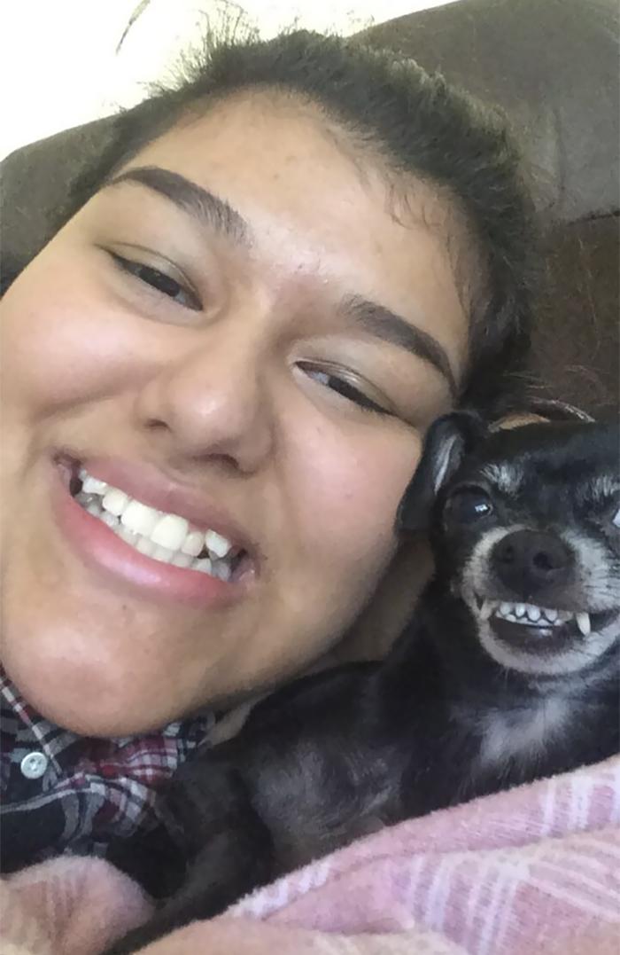 chien imitation