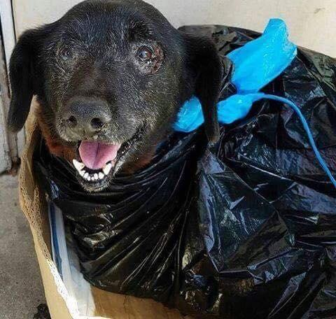 blackie chien sac poubelle