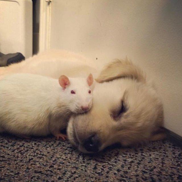 bob lapin et grace chien