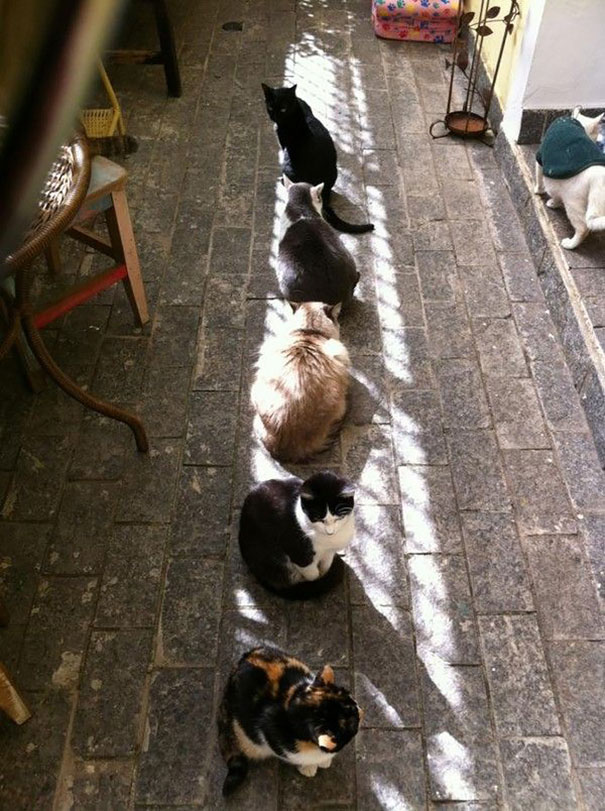 chats soleil rue