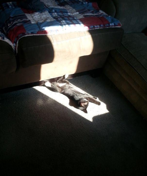 chaton soleil