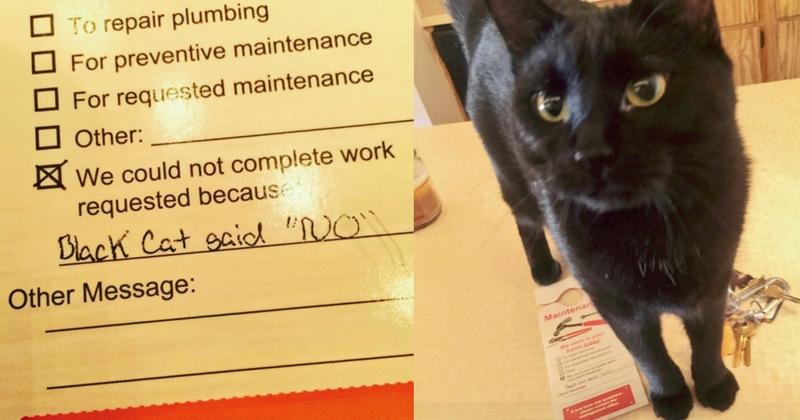 chat noir dit non