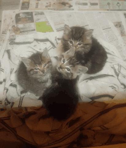chatons piège