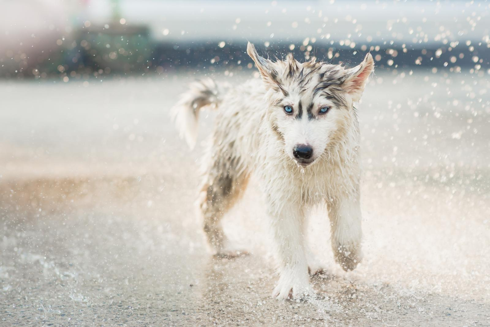 chien marche dans l'eau