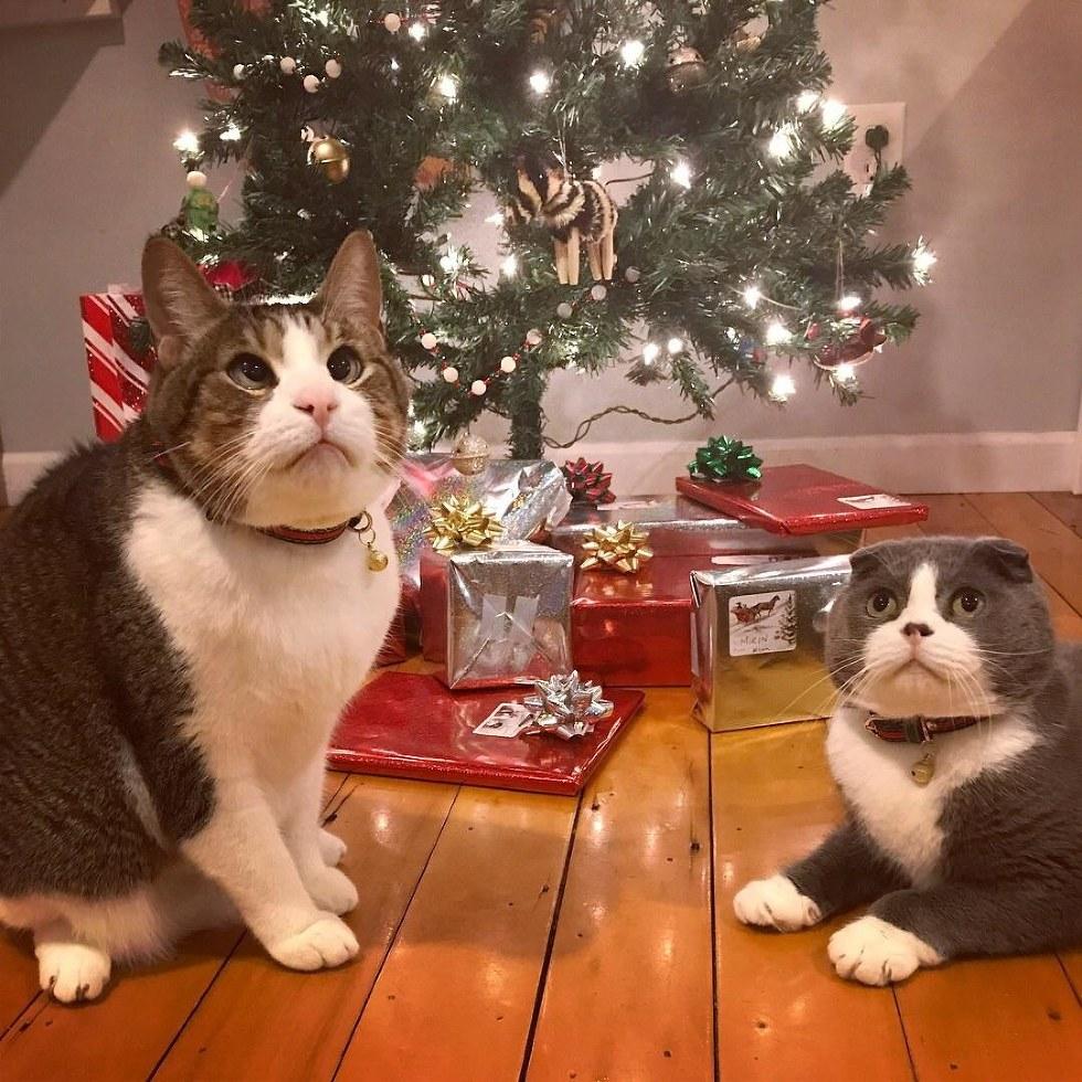 crosby chat qui louche