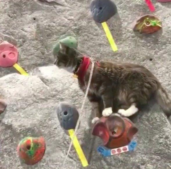 chat escalade