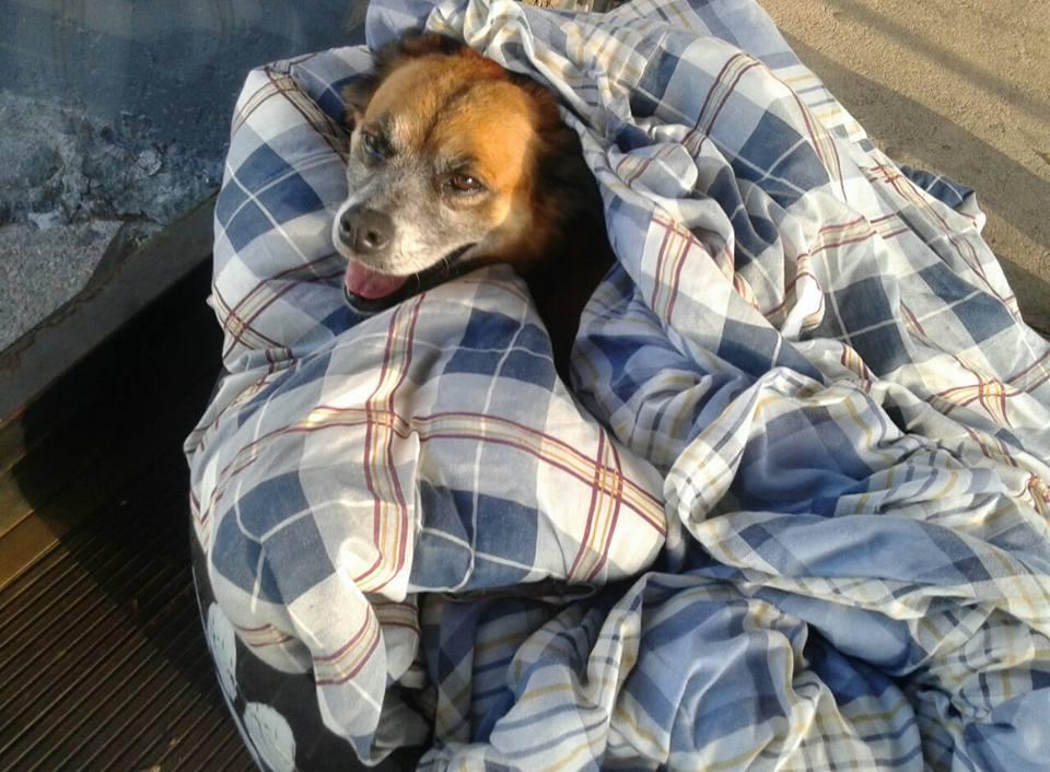 chiens errants Brésil gare routière