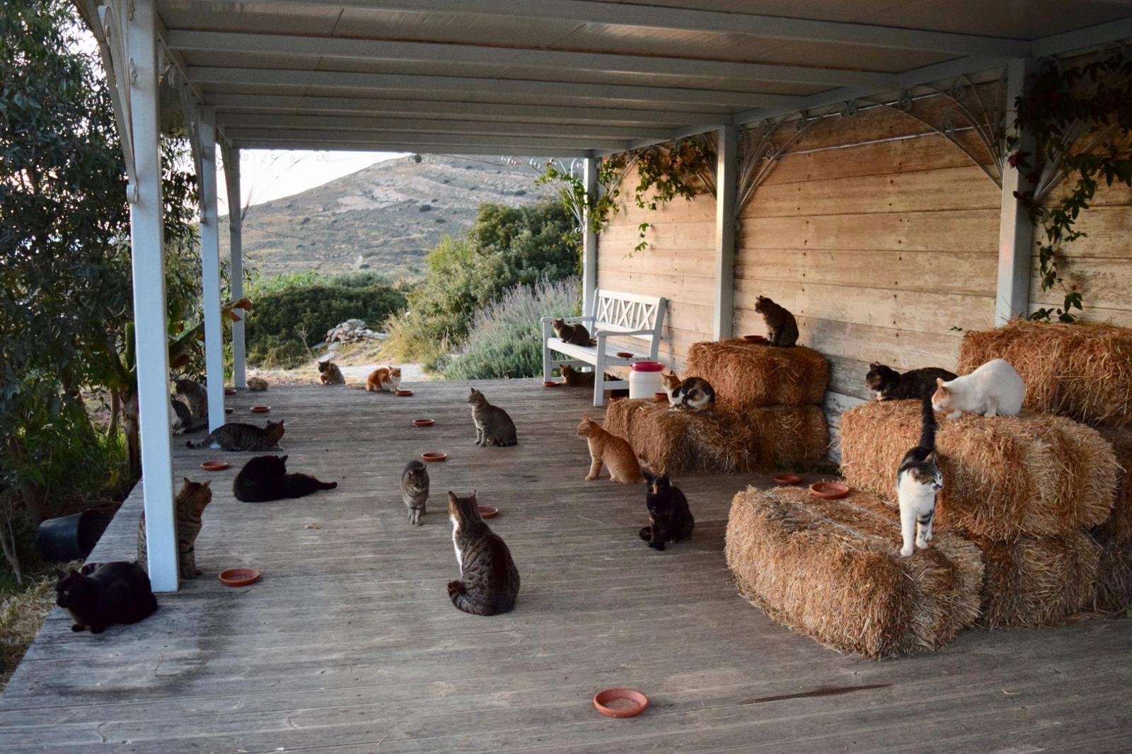grece refuge chats syros